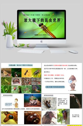放大镜下的昆虫世界科学课件PPT亚博体育主页