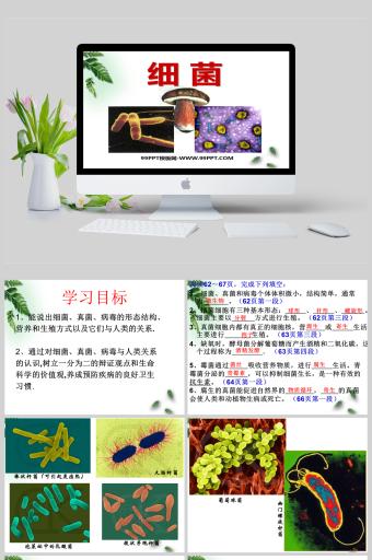 人教版生物课件细菌真菌初二生物课件PPT亚博体育主页